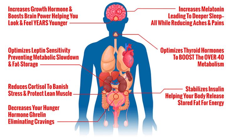 how 40 hormone reset diet works